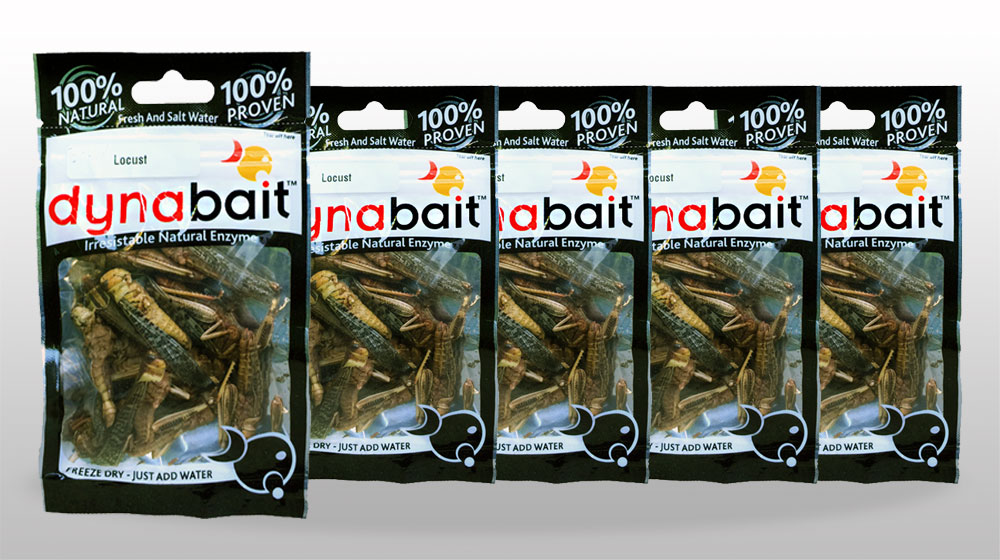 Dynabait Dry Medium Squid Fishing Bait